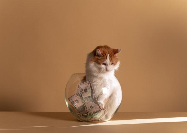 kot w słoiku z pieniędzmi